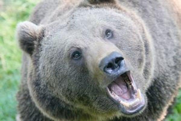 Medveď zaskočil hubára.