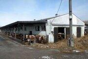 Keby farmári zosunutú masu pôdy pravidelne neodvážali, poškodila by veľký kravín.