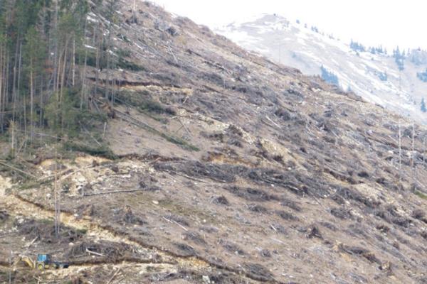 Najkritickejšia situácia je podľa ekológov vNárodnom parku Nízke Tatry.