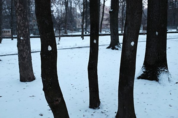 Bodky na stromoch ľudí prekvapili, ich autor je neznámy.