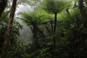 Takzvaný hmlový les má ideálne podmienky pre obojživelníkov.