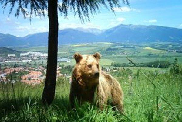 Fotopasca zachytila aj medveďa pod stromom. Možno pod ním hľadal tieň.