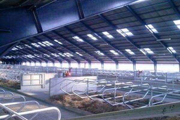 Hostel u spokojnej kravy.