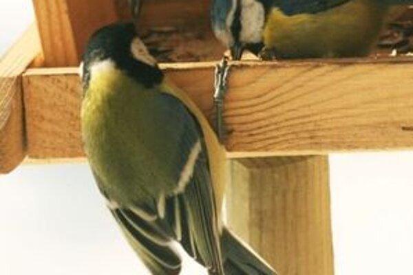 Prvýkrát sa zoológovia zo Správy TANAP-u rozhodli priniesť divákom aj život spevavých vtákov v zime.