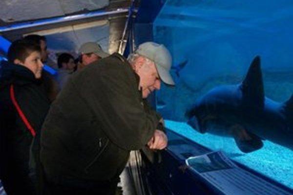 Živé žraloky a ostorepa v mobilnom akváriu si môžete pozrieť v Liptovskom Mikuláši na Námestí mieru od 17. do 19. apríla a v Ružomberku od 20. do 22. apríla.