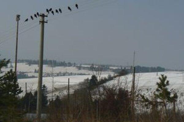 Najmä v zime okolo smetiska posedávajú havrany, v lete k nemu vraj prilietajú aj čajky.