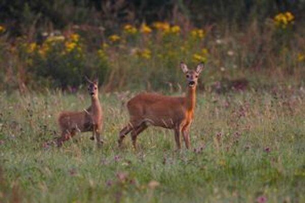 Ochrana prírody je prioritou každej poľovníckej organizácie a každého jej člena.