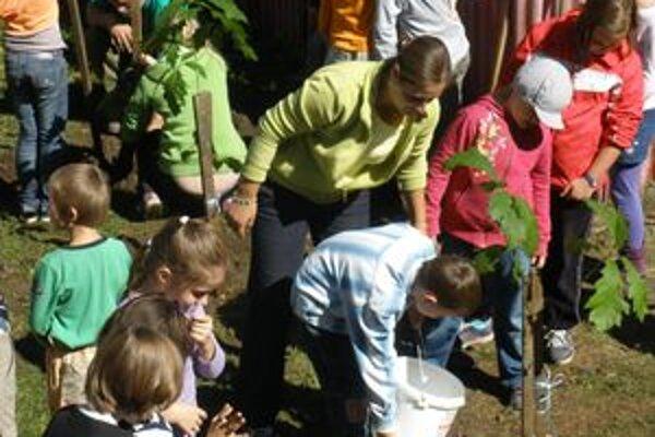 Deti sadili v areáli školy červené duby a smrek.