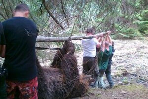 Statného medveďa nakladalo na auto osem chlapov, pomáhali poľovníci, policajti aj zamestnanci hotela.