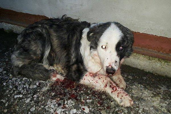 Vystrašený a krvácajúci psík sa nevládal hýbať.