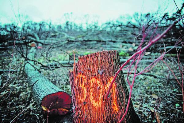 Výrub lesa.