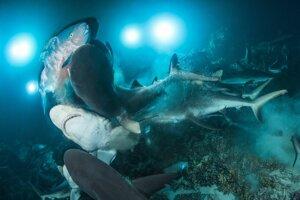 Víťazná fotografia celej súťaže. Žraloky so svojím úlovkom. Fotografia vznikla pri ostrovoch Francúzskej Polynézie.