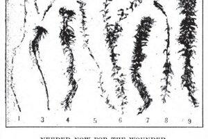 Noviny informovali o organizovaných zberoch machu a dávali dobrovoľníkom inštrukcie o tom, ktorý mach je najvhodnejší na výrobu obväzov.