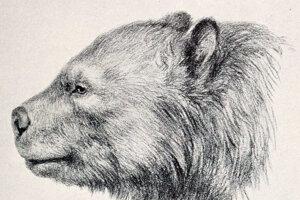 Medveď druhu Arctotherium angustidens žil v Amerike asi pred 700-tisíc rokmi.