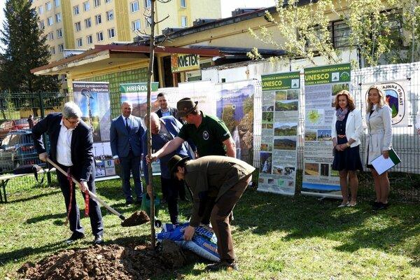 Prvý strom k výročiu zasadili v Hriňovej.