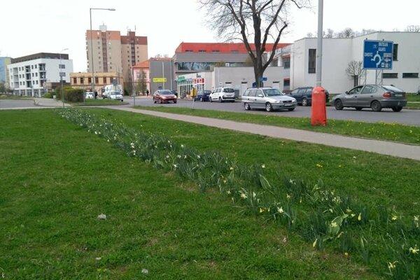 Rozkvitnutým kvetom obyvatelia často neodolajú.