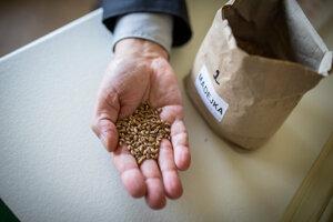 Pred uskladnením sa musí otestovať aj klíčivosť a stav semien.