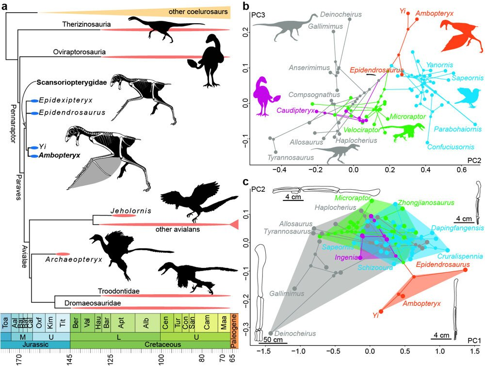 rôzne spôsoby datovania fosílií