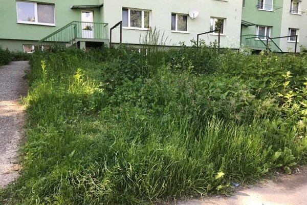 Vysoká tráva v predzáhradke na sídlisku.