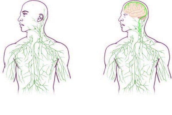 Lymfatické cievy si doteraz lekári ani vedci nevšimli.
