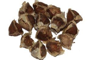 Semiačka moringy olejodárnej dokážu vyčistiť kalnú vodu.