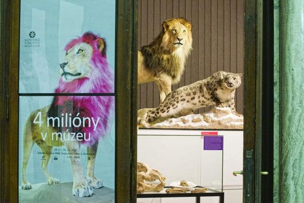 Výstava 4 milióny v múzeu / Čo sme nadobudli predstavuje najnovšie prírastky do všetkých osemnástich múzeí Slovenského národného múzea.