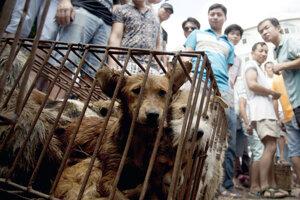 Čínsky festival psieho mäsa je napriek protestom legálny.