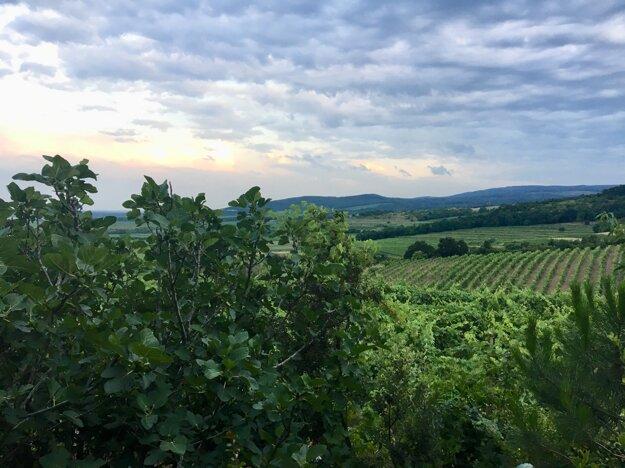 Víno a levanduľa 2019