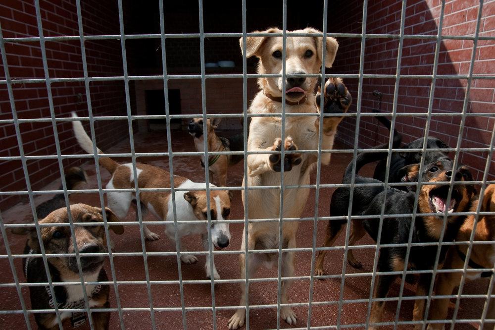 Útulky sa plnia ďalšími psami, štát na ne neprispieva.