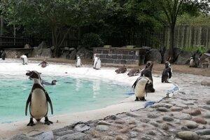 Tučniaky sa tešia u návštevníkov veľkej obľube.