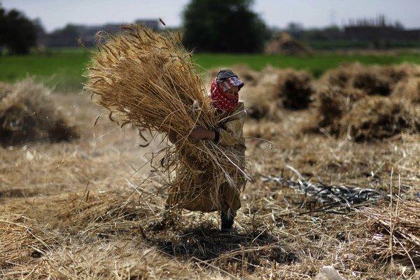 Poľnohospodárstvo mohlo vzniknúť na viacerých miestach.