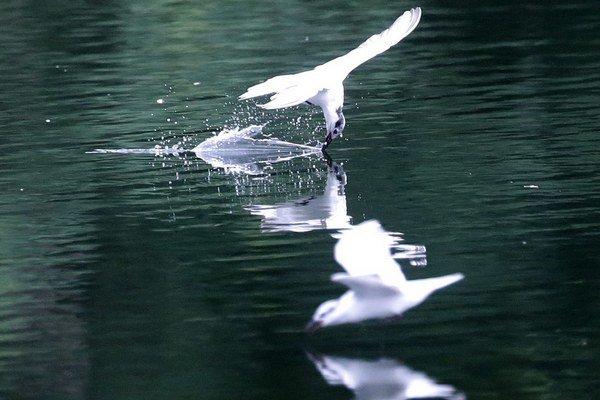 Rušné prostredie vtákom nevyhovuje.