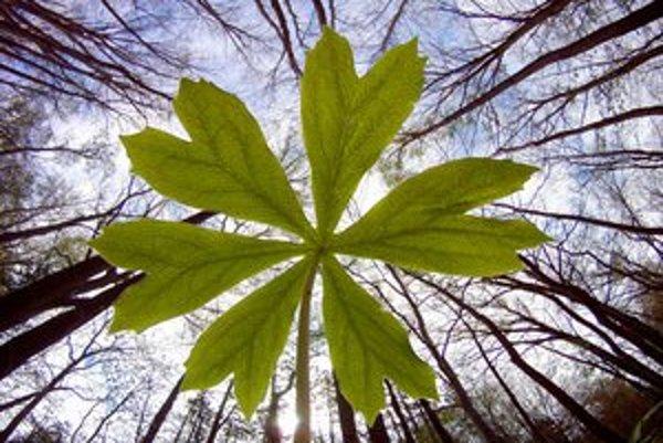 Rastliny možno majú ďalší spôsob komunikácie. Pripomína našu schopnosť počúvať.