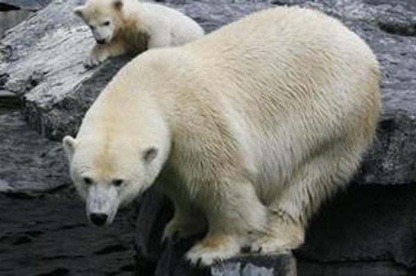 Bod zlomu by mal v prípade medveďov nastať o desať rokov.