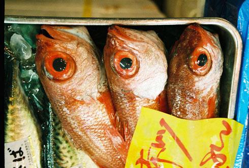 2.ryby.jpg