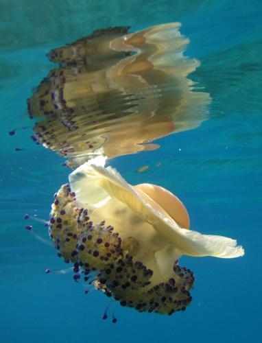 meduza.2.ap.jpg