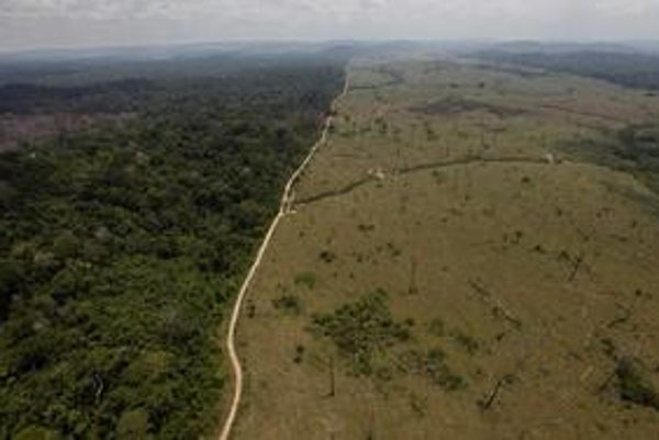 Odlesňovanie môže mať aj pozitívny výsledok - nález novej civilizácie.
