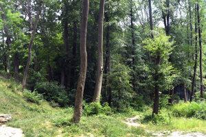 Mimovládne organizácie hodnotili volebné programy stán aj z hľadiska ochrany príroody a lesov