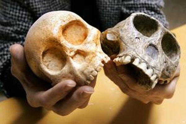 Všimnite si rozdiely: vľavo lebka hominida starého tri milióny rokov, vpravo lebka súčasného šimpanza.