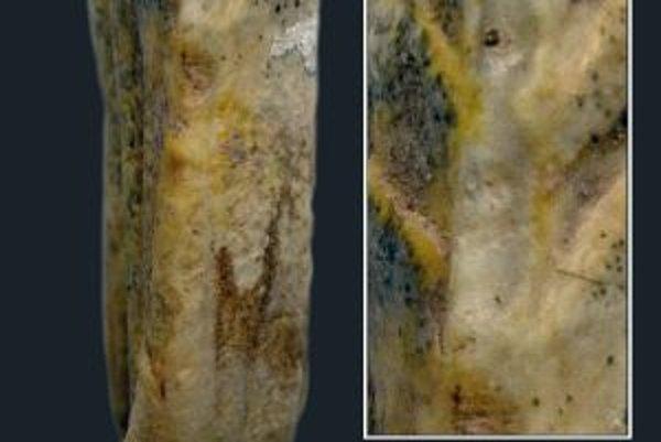 Na druhom dolnom premolári žrebca z Botaja v severnom Kazachstane, ktorý žil niekedy v rozpätí rokov 3563 až 3521 p. n. l., vedci našli typické znaky, aké zanecháva výlučne dlhé nosenie zubadla, ohlávky či uzdy. Tento zub pochádza z doby približne o tisíc