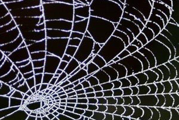 Webová pavučina je oveľa zraniteľnejšia než si myslíte.