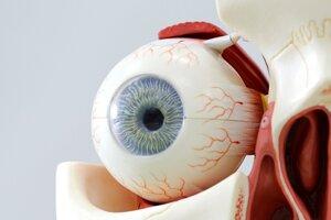 Anatomický model ľudského oka.
