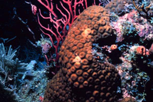 Zdravý koralový útes.