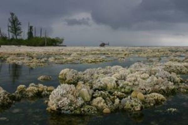 Nedávno odumretý koralový útes - tieto koraly doplatili na zdvih morského dna, spôsobený zemetrasením s magnitúdo 8,4 západne od strednej Sumatry v septembri 2007.