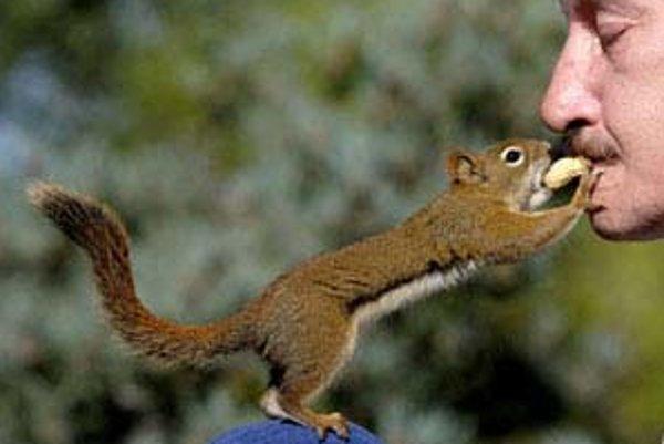 Veverička červená má ešte šancu prežiť.