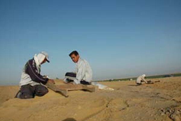 Robotníci pri vykopávkach dôkladne preosievali piesok a pôdu, aby neunikli ani najmenšie zrnká. V pozadí je dnes poľnohospodársky využívané územie Fajjúmskej oázy.