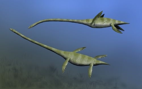 elasmosaurus_nt_r2510.jpg