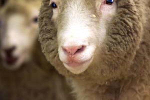 Ovca Dolly bola prvým cicavčím klonom z dospelej telovej bunky. Klonovanie embryonálnych buniek z makakov je iba logickým pokračovaním jej príbehu.