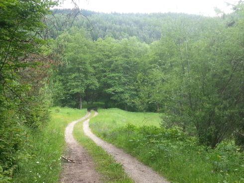 6.-pokrac--780-ujeme-lesnou-cestou_r2129.jpg