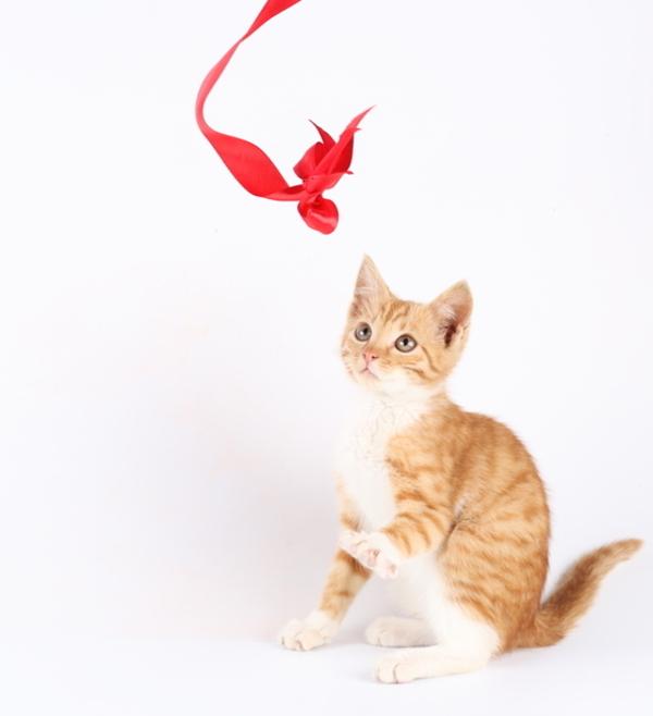 zvierata1.jpg